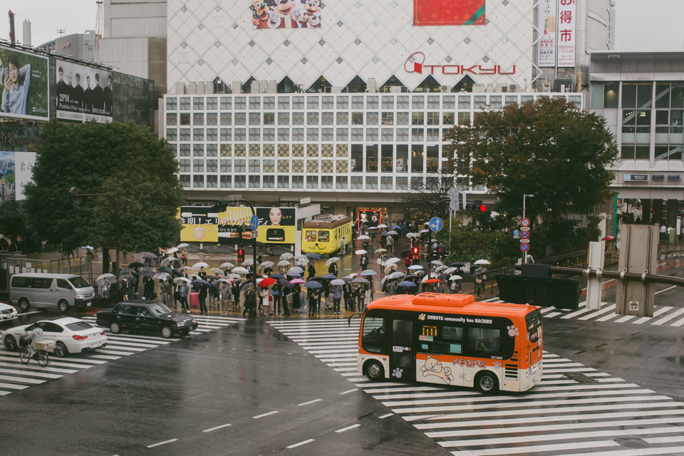 Shibuya crossing - The cat, you and us