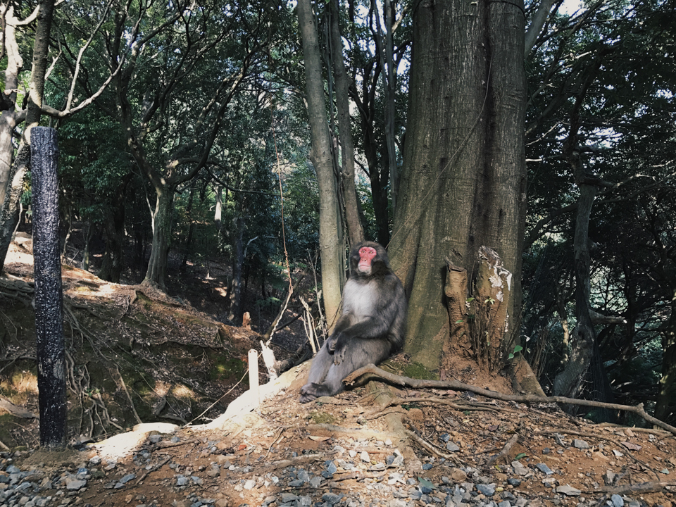 Monkey Park Arashiyama - The cat, you and us