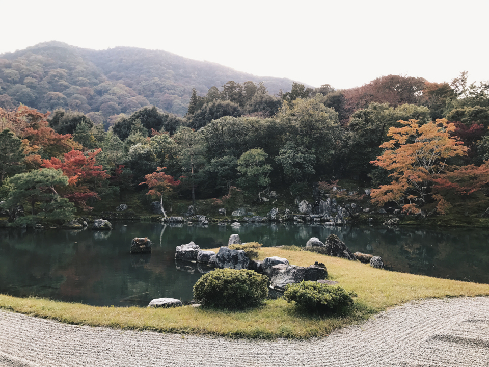 Tenryu-ji temple autumn - The cat, you and us