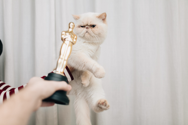 Bloopers of the year 2016 - The cat, you and us