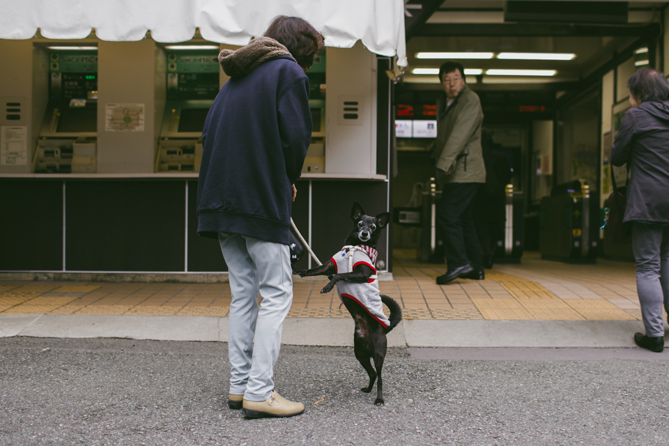 Kamakura station - The cat, you and us