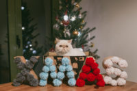 Merry Christmas 2016 - The cat, you and us