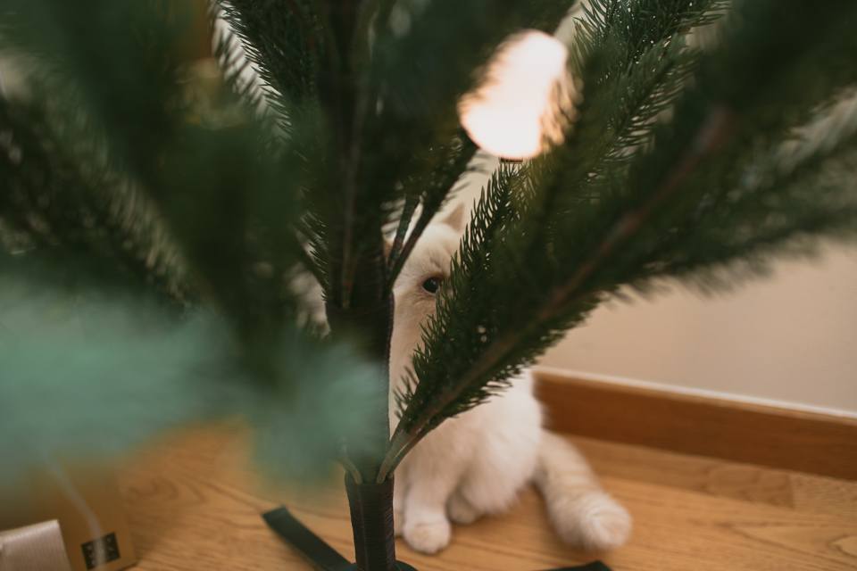 Christmas eve Juno - The cat, you and us