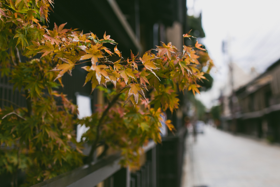 Autumn leaves in Kyoto - The cat, you and us