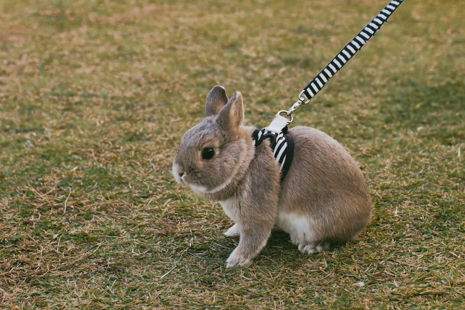Small Japanese rabbit - The cat, you and us