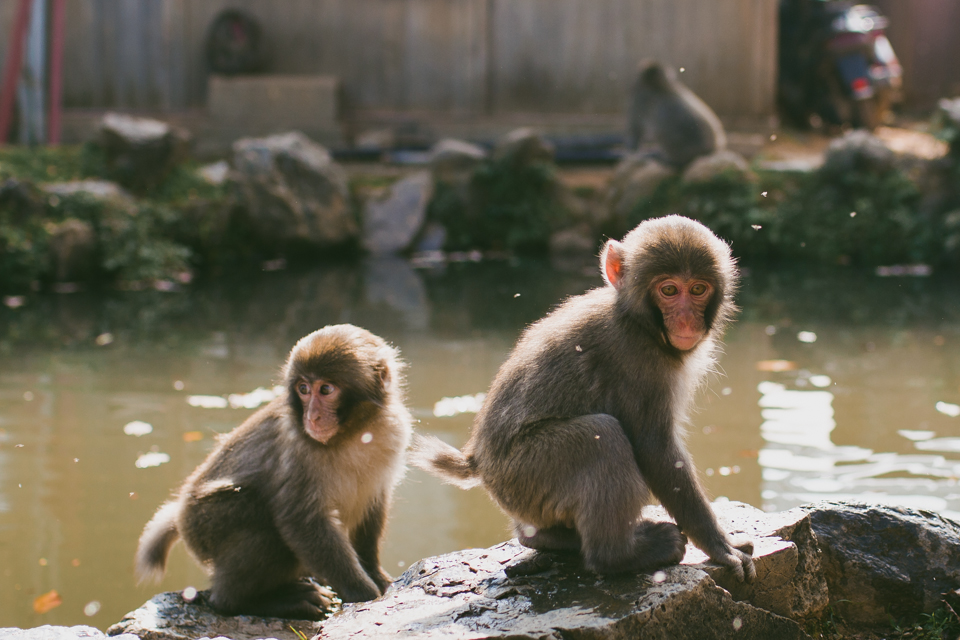 Arashiyama monkey park - The cat, you and us
