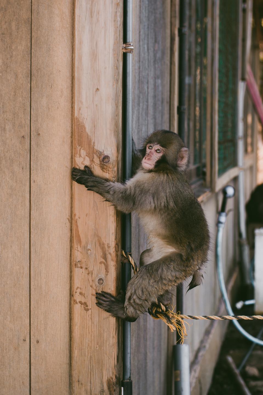 Arashiyama monkey park - The cat, you and us