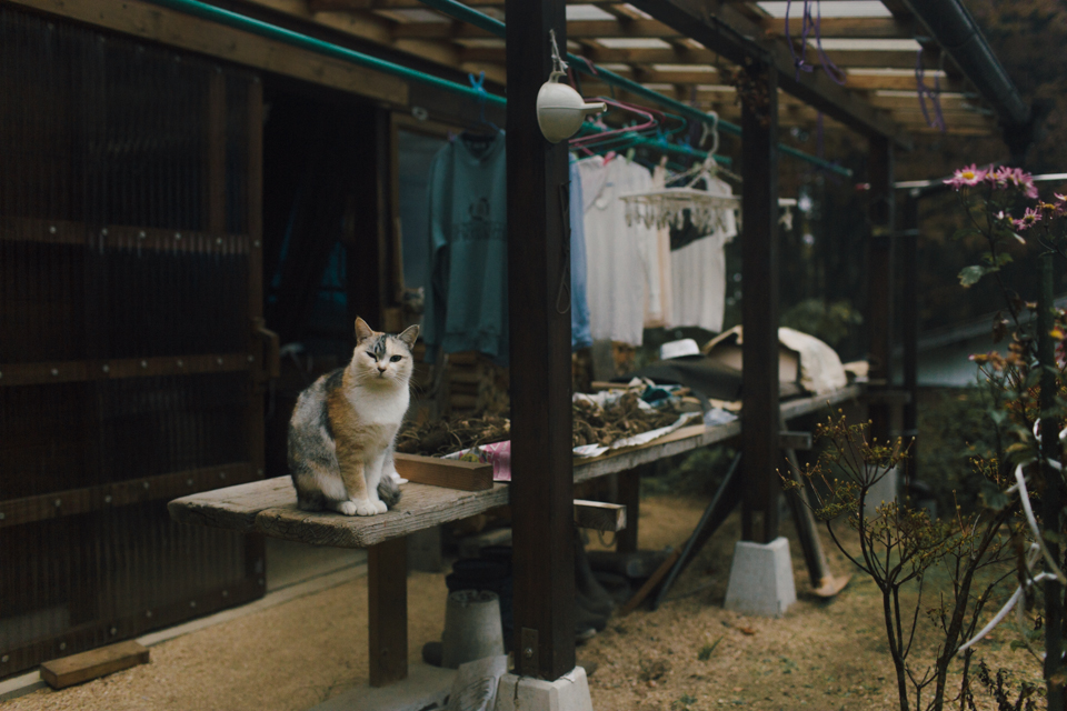 Nakasendo trail - The cat, you and us