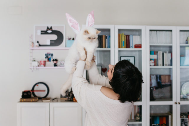 Juno for Easter - The cat, you and us