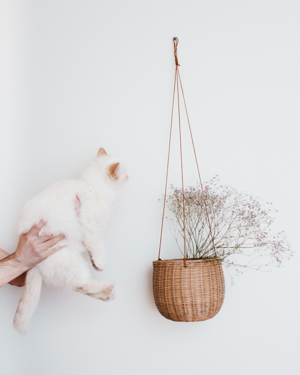 Catweek: Juno & the basket of flowers