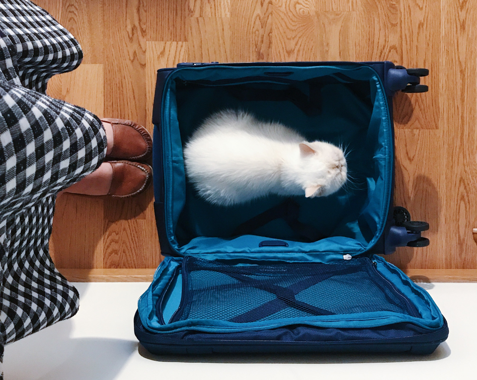 Juno the cat in a travel bag - The cat, you and us