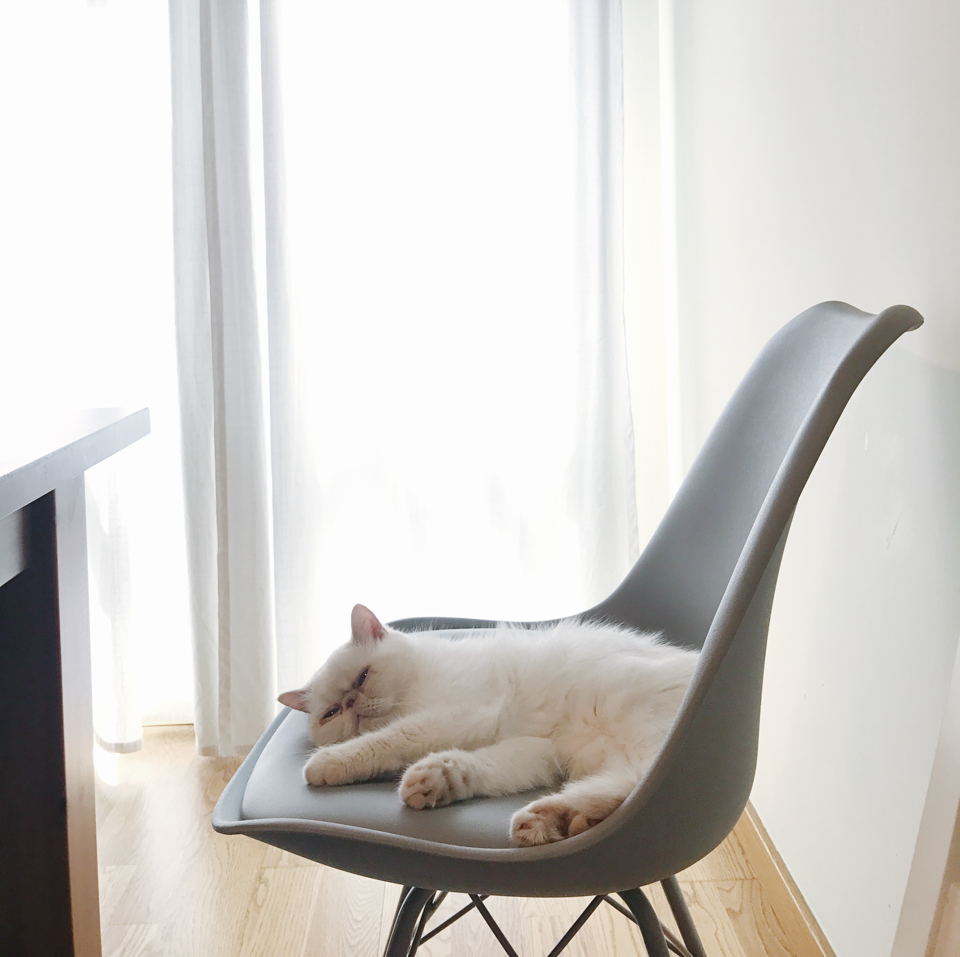 Juno sleeping in the chair - The cat, you and us