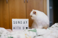 Juno - The cat, you and us
