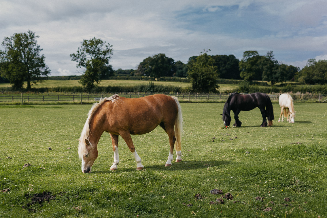 Horses in the middle of a Cotswolds walk - The cat, you and us