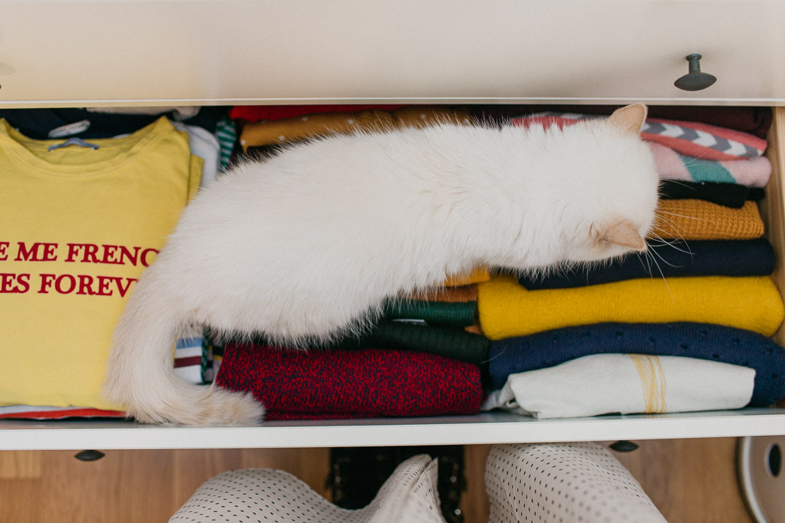 Tidying up with us - The cat, you and us
