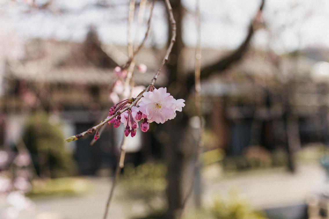 Yanaka Tennoji Temple - The cat, you and us