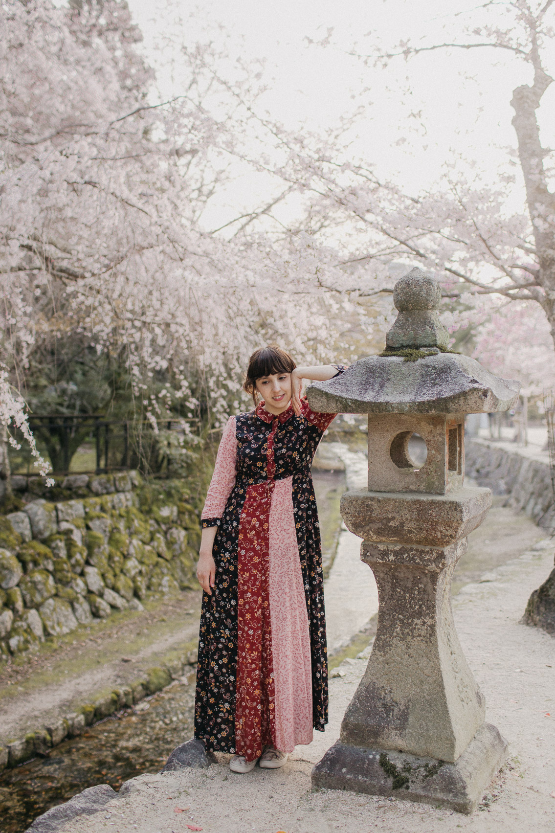 Sakura in Miyajima - The cat, you and us