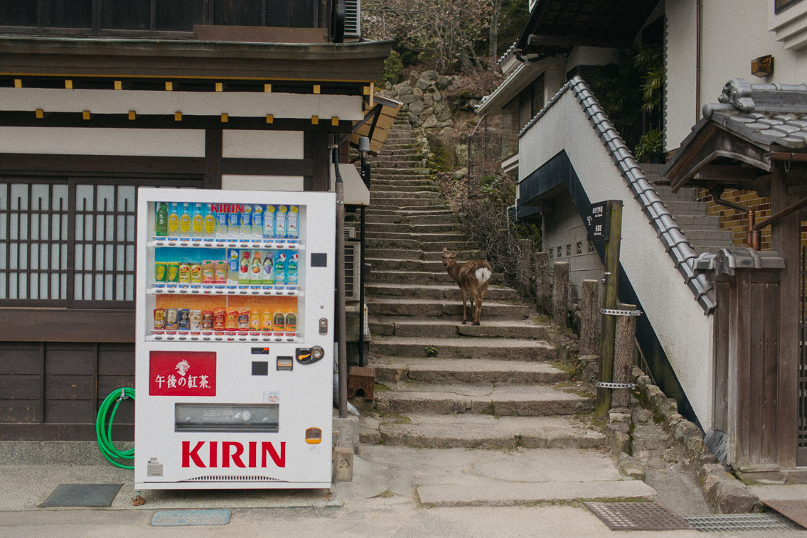 Deers in Miyajima - The cat, you and us