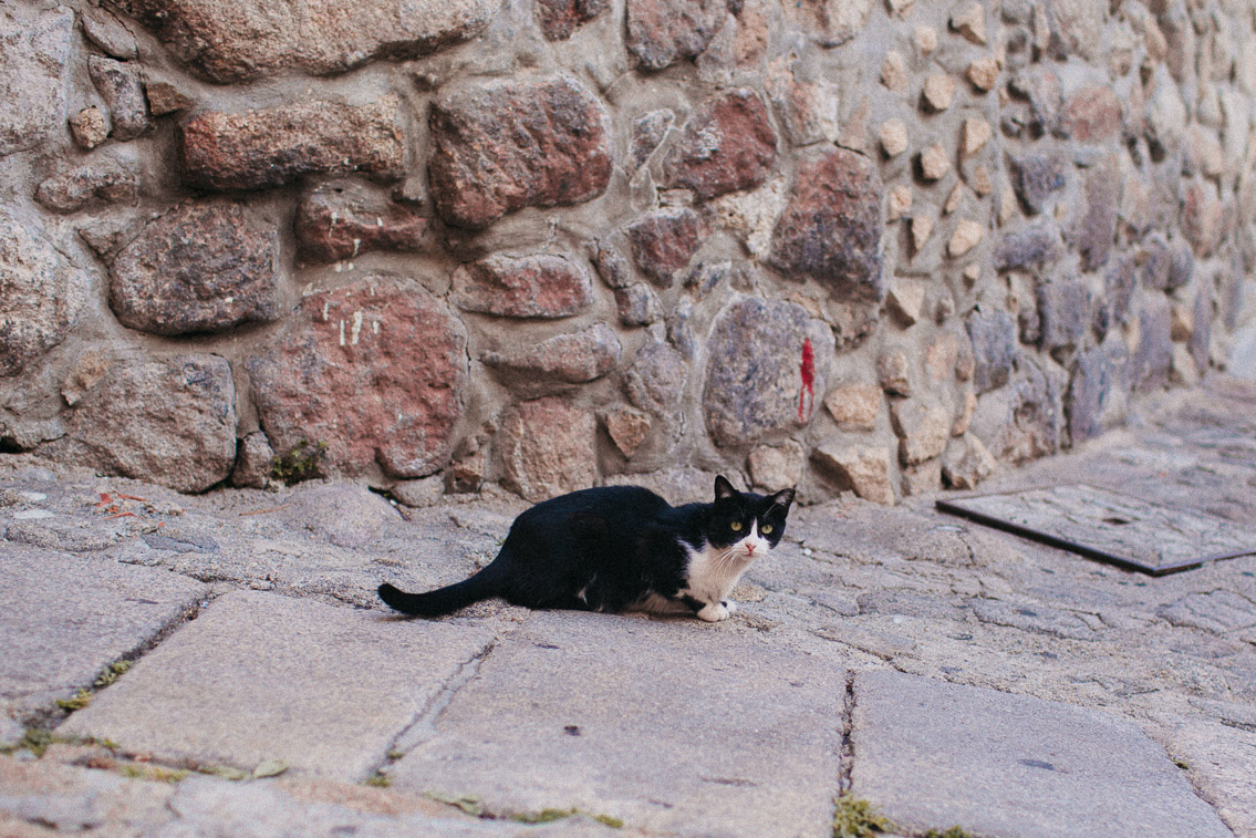 Cats of Porto - The cat, you and us