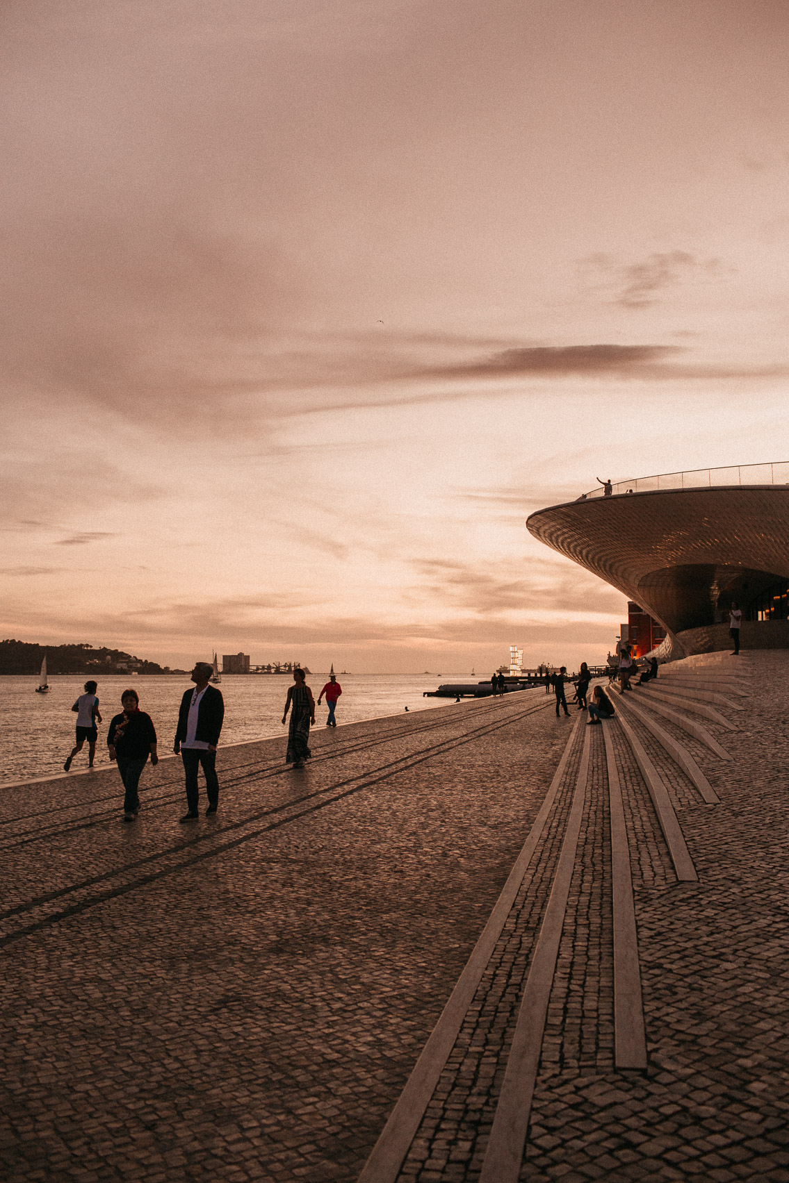 MAAT Lisbon - The cat, you and us