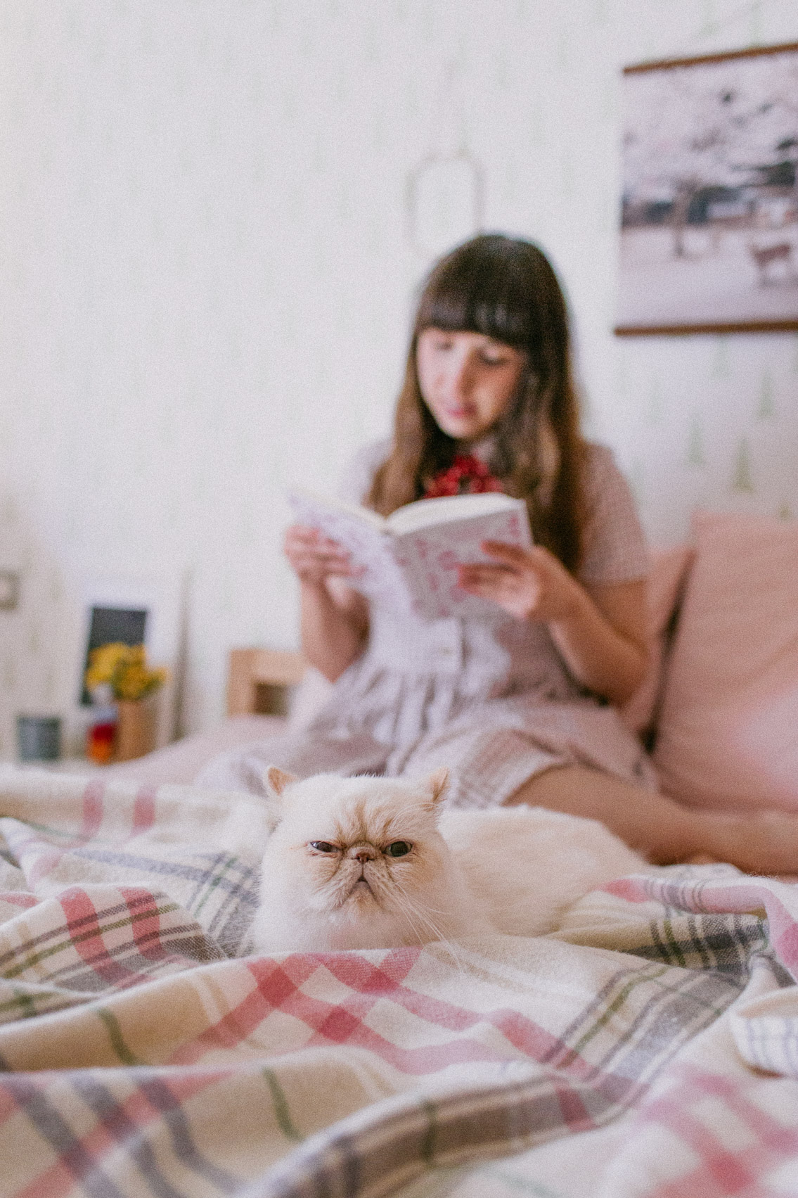 Cat and a girl reading