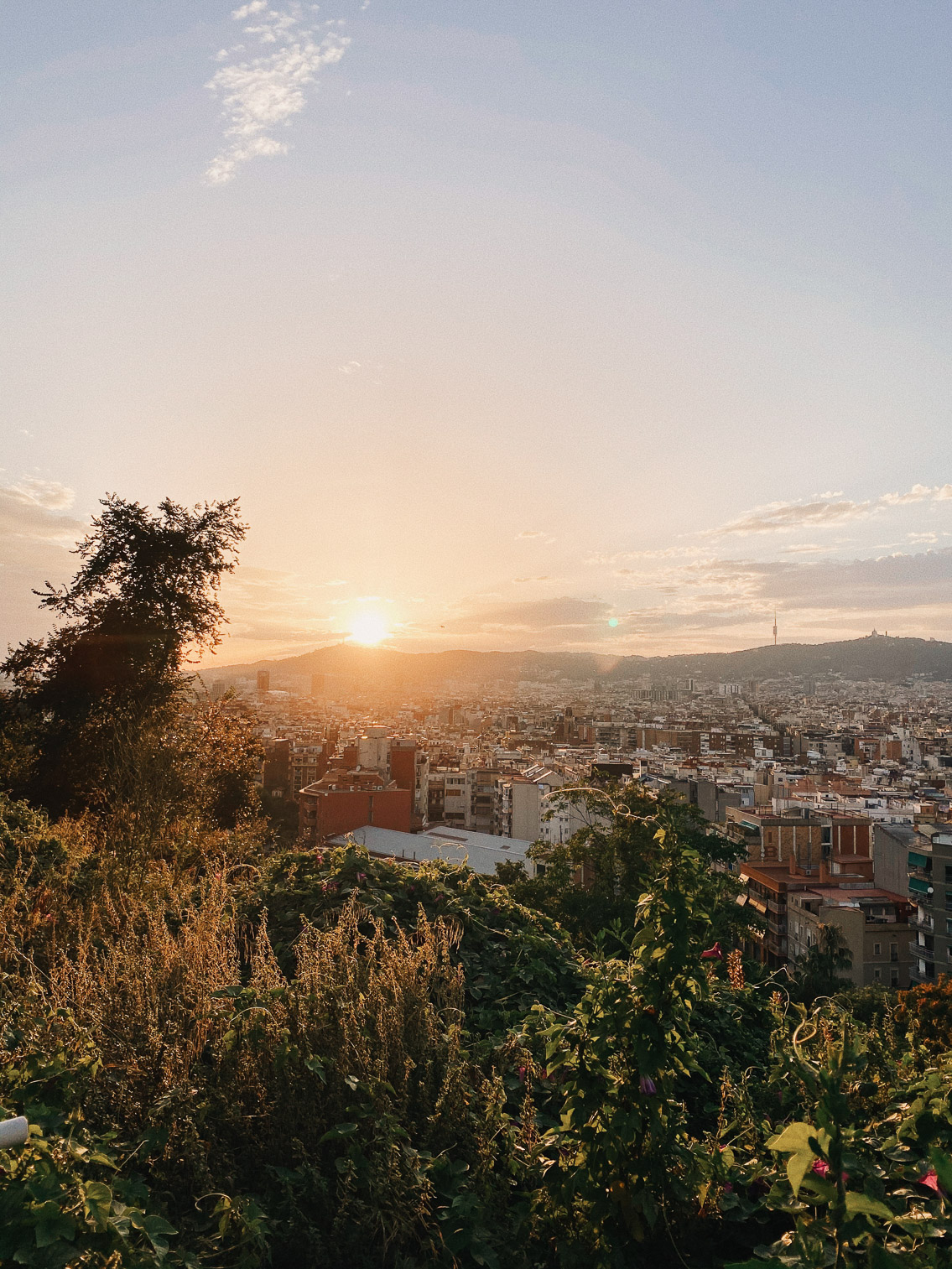 Barcelona sunset views - The cat, you and us