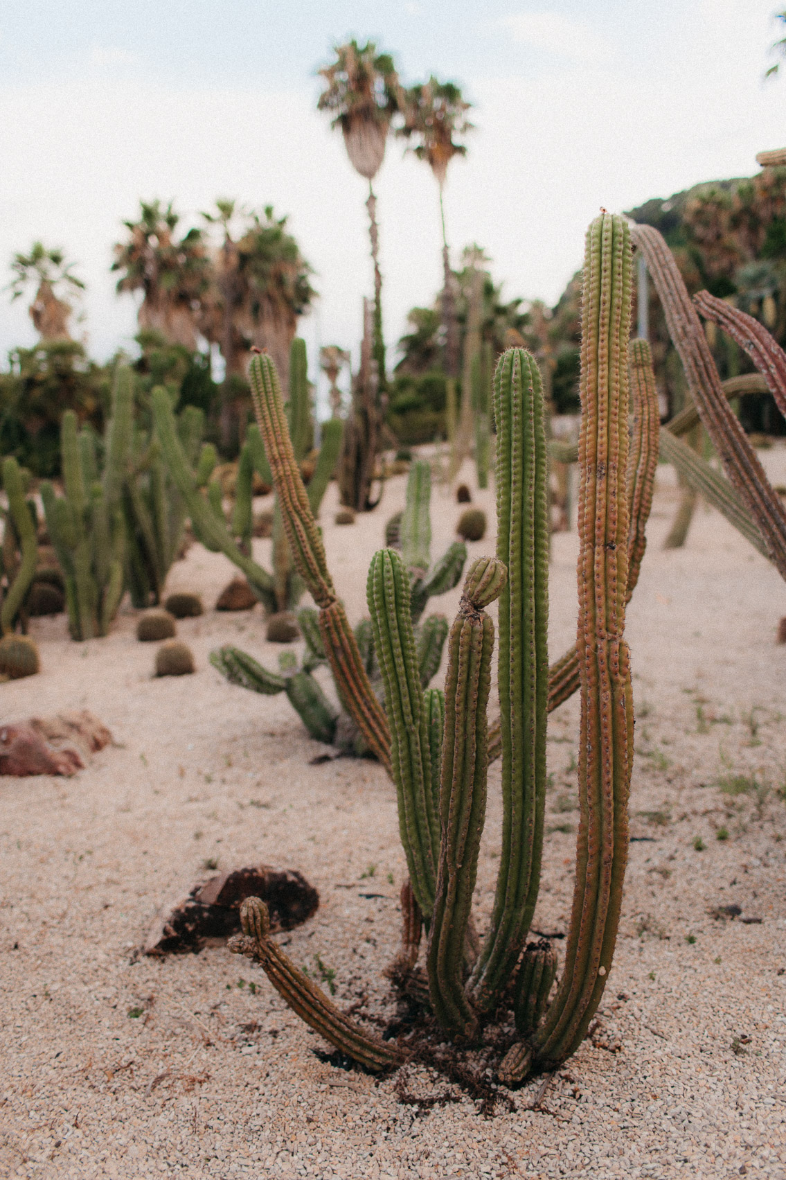Barcelona cactus garden - The cat, you and us