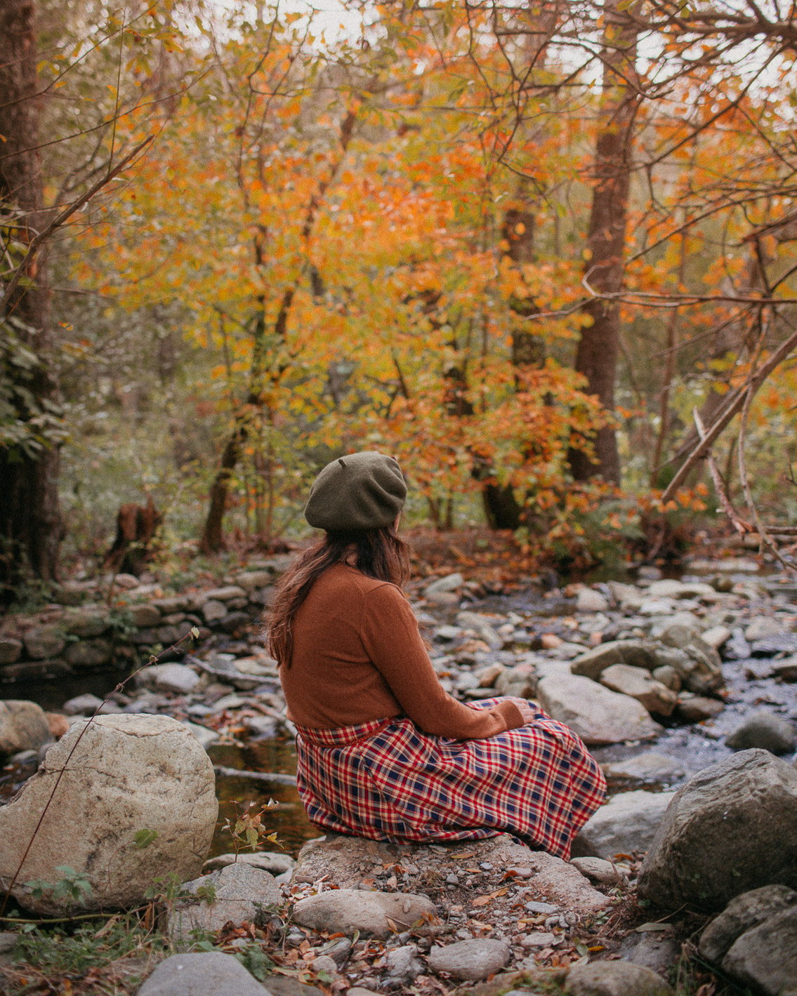 Montseny fall colors (otoño, tardor) - The cat, you and us