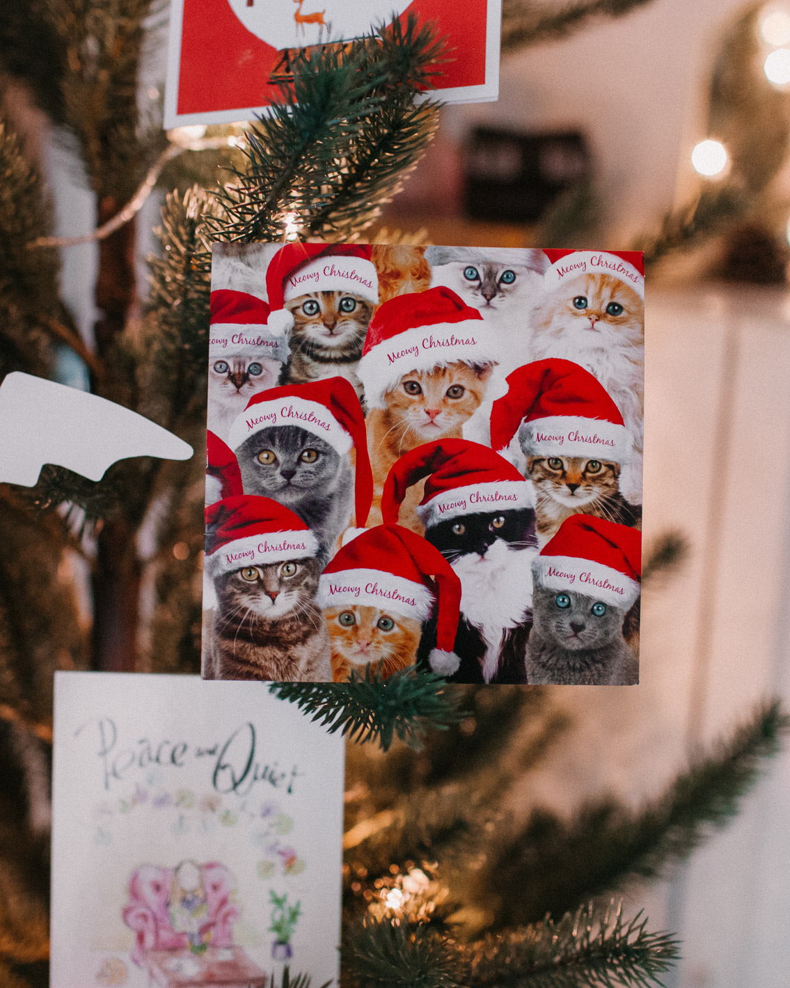 Christmas postcards 2020 - The cat, you and us